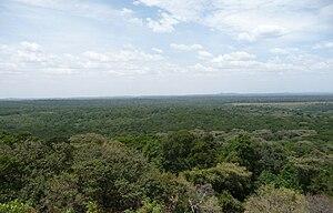 Kakamega Forest - View over Kakamega forest.