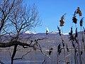 Kastoria bird.jpg