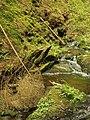 Kavinský potok (13).jpg