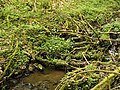 Kavinský potok (9).jpg
