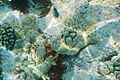 Kealakekua Bay, Captain Cook - panoramio (37).jpg