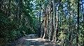 King Range National Conservation Area, California - Kings Peak Road (30078526128).jpg
