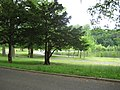 Kissena Park, Flushing - panoramio (1).jpg