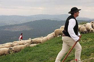 Silesian Beskids - Shepherds in Silesian Beskids
