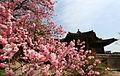 Korea Palace Spring Flowers 07.jpg
