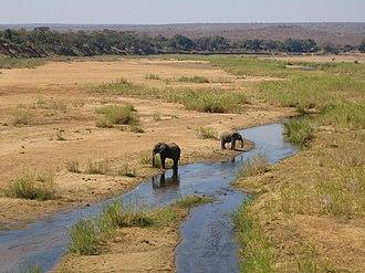 Shingwedzi - Image: Kruger National Park Shingwedzi River with elephants