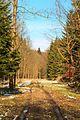 Kvetoucí sněženky v PP Sněženky ve Vysokém lese 40.jpg