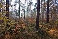 LSG Forst Rundshorn IMG 2313.jpg