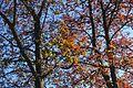 Lac Daumesnil @ Bois de Vincennes @ Paris (26747062115).jpg