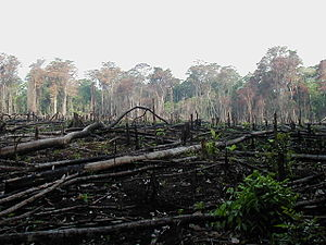 Habitat destruction - Jungle burned for agriculture in southern Mexico