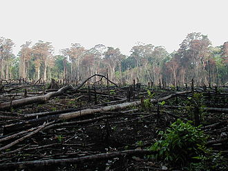 Tragedy of the commons - Clearing rainforest for agriculture in southern Mexico.
