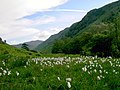 Langstrath with cotton grass - geograph.org.uk - 878737.jpg
