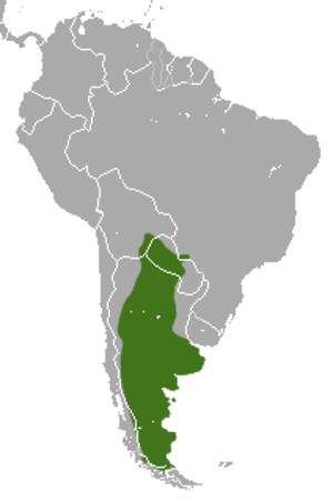 Big hairy armadillo - Image: Large Hairy Armadillo area