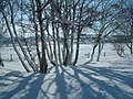 Late snow near Bonar Bridge - geograph.org.uk - 607000.jpg
