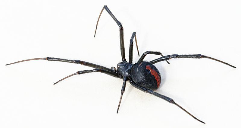 Jak zrobić naklejki na paznokcie - zabawa z dziurkaczem i pająkami