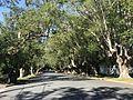 Laurel Avenue, Chelmer, Queensland.jpg