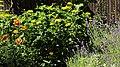 Lavendelbeet im Innenhof 03.jpg