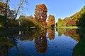 Le miroir parfait à l'étang de Dirkbeek (22889856872).jpg