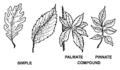 Leaf (PSF).png