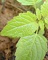 Leaf shape 10.jpg