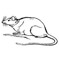 Lear 2 - Mouse.jpg
