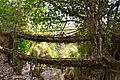 Lebende Doppeldecker-Brücke in Meghalaya.JPG