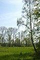 Leiemeersen , typisch rivierlandschap te Sint-Martens-Latem - 372342 - onroerenderfgoed.jpg
