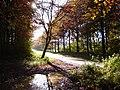 Leigh Woods - panoramio.jpg
