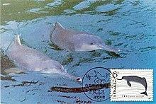 Baiji White Dolphin