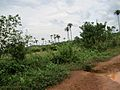 Liberia, Africa - panoramio (222).jpg
