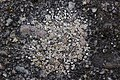 Lichen (39684989845).jpg