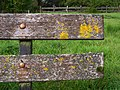 Lichen on seat, Cranny - geograph.org.uk - 1002780.jpg