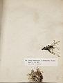 Lichenes Helvetici III IV 1842 011.jpg