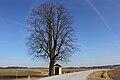 Linde östlich von Groß-Siegharts 2015-04 NDM WT-047.jpg