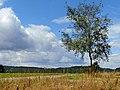 Lindenhardt (Am Horizont) - panoramio.jpg