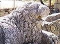 Lion at Adana Museum (1599787437).jpg