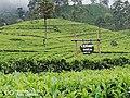 Lipton Seat,Srilanka.jpg