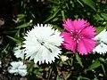 Littleflowers8.jpg