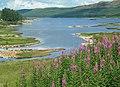 Loch Doon View - geograph.org.uk - 904228.jpg