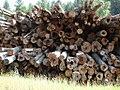 Log pile in Troy, ID. (4937367948).jpg