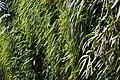 Longwood 2011 09 02 0365 (6160288373).jpg