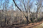 Looking NW at Arlington Woods - Section 29 - Arlington National Cemetery - 2013-01-18