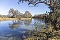 Looking upstream of the Murray River on Gateway Island (1).jpg