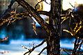 Loring Park Minneapolis Winter (3161045914).jpg