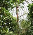 Luisenpark Pflanzenschauhaus 01.jpg