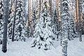 Lumine Mädara mets.jpg