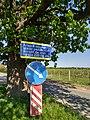 MD.DN.Dondușeni - stejar pedunculat pe traseul Dondușeni-Plop - apr 2018 - 12.jpg