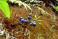 Madagascar 06 798 - Flickr - gailhampshire.jpg