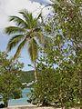 Magen's Bay Beach, St. Thomas, United States Virgin Islands - panoramio (2).jpg