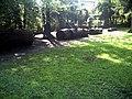 Mai - Botanischer Garten Freiburg - 2016 Redwood - panoramio.jpg